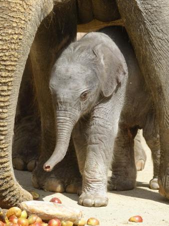 DEU Zoo Elefant