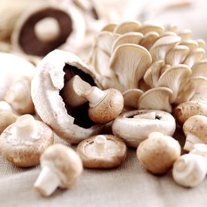 Still Life with Button Mushrooms and Oyster Mushrooms by Joff Lee Studios