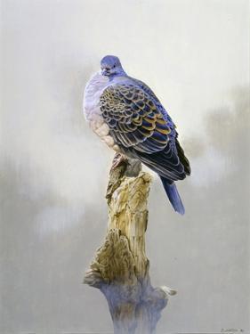 Turtle Dove by Joh Naito