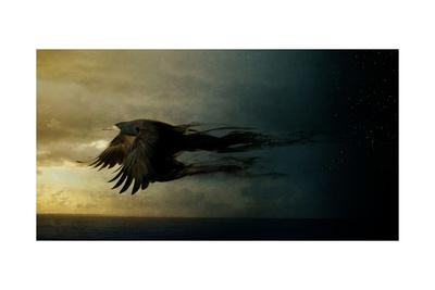 Bird Kingdom 2