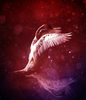 Bird Kingdom 7 by Johan Lilja
