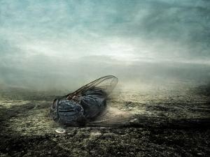 Fly, 2013 by Johan Lilja