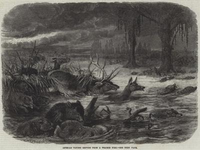 Animals Taking Refuge from a Prairie Fire
