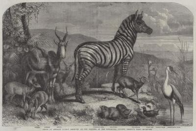 Group of Animals Lately Received at the Gardens of the Zoological Society, Regent's Park