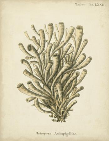 Coral Collection IX by Johann Esper
