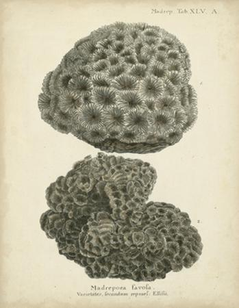Coral Collection V by Johann Esper