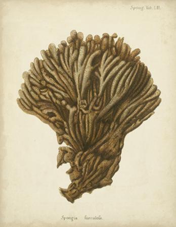 Coral Collection VI by Johann Esper