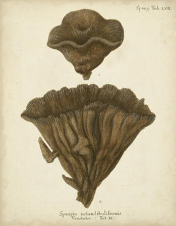 Coral Collection VIII by Johann Esper