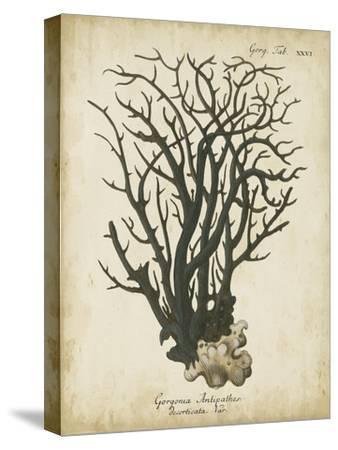 Esper Antique Coral I by Johann Esper
