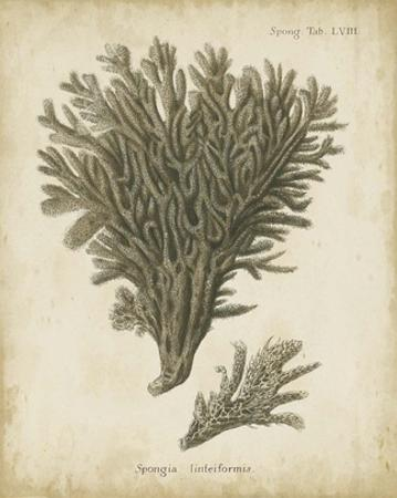 Esper Antique Coral III by Johann Esper
