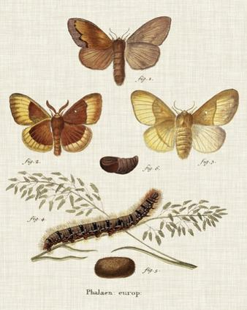 Life Cycle of a Moth I by Johann Esper