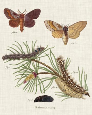 Life Cycle of a Moth II by Johann Esper