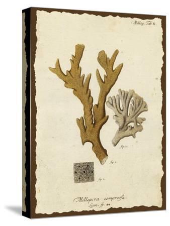 Natura Coral I by Johann Esper