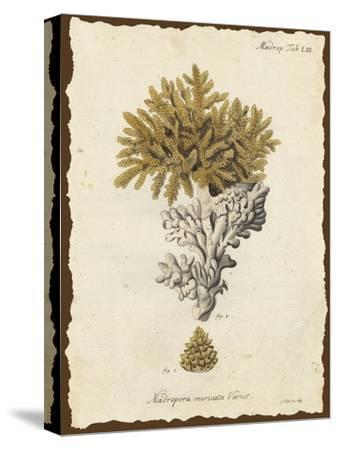 Natura Coral III by Johann Esper