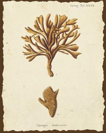 Natura Coral IV by Johann Esper