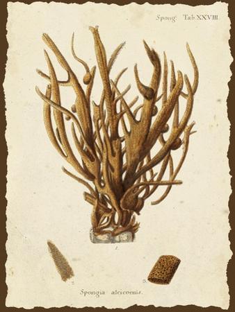 Natura Coral V by Johann Esper