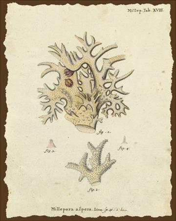 Natura Coral VI by Johann Esper