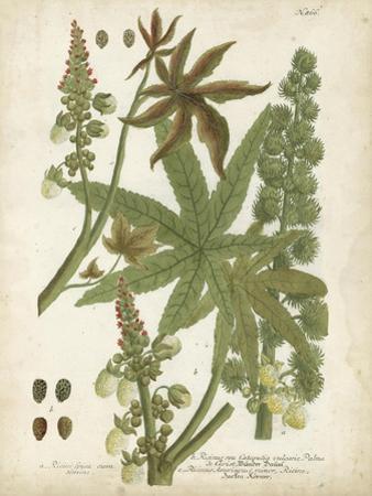 Weinmann Tropical Plants I by Johann Weinmann