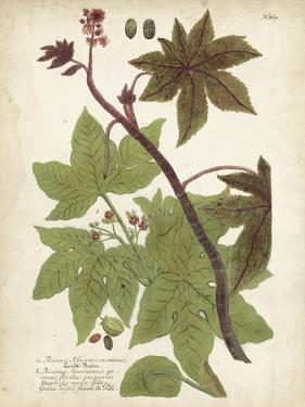 Weinmann Tropical Plants II by Johann Weinmann