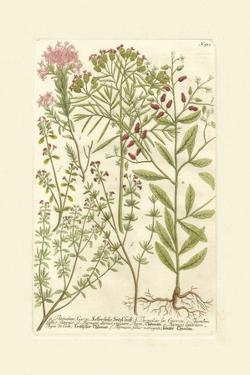 Garden Varietals I by Johann Wilhelm Weinmann