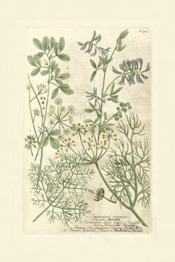 Garden Varietals IV by Johann Wilhelm Weinmann