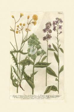 Garden Varietals VI by Johann Wilhelm Weinmann