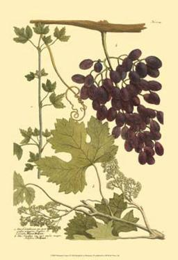 Grapes I by Johann Wilhelm Weinmann