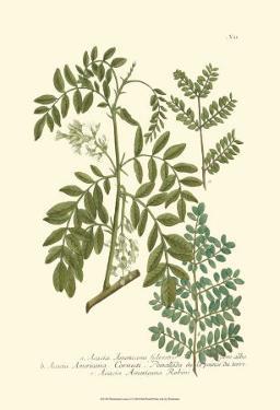 Leaves I by Johann Wilhelm Weinmann