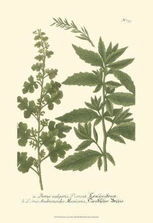 Leaves III by Johann Wilhelm Weinmann