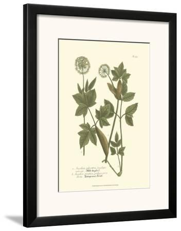 Leaves IV by Johann Wilhelm Weinmann