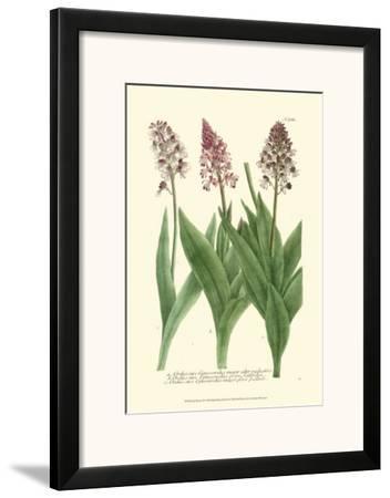 Lilac Blooms II by Johann Wilhelm Weinmann