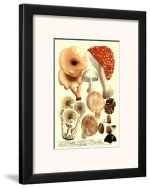 Mushrooms I by Johann Wilhelm Weinmann