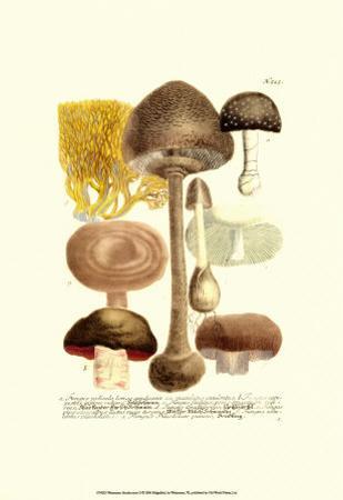 Mushrooms II by Johann Wilhelm Weinmann