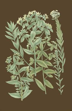 Organic Greenery I by Johann Wilhelm Weinmann