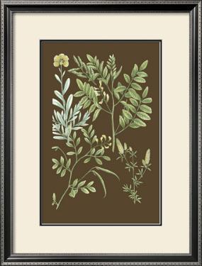 Organic Greenery II by Johann Wilhelm Weinmann