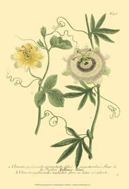 Passion Flower I by Johann Wilhelm Weinmann