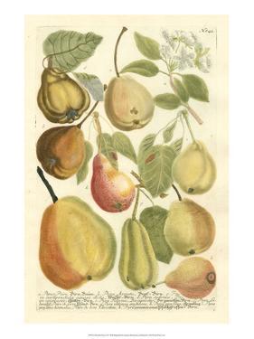 Plentiful Pears II by Johann Wilhelm Weinmann