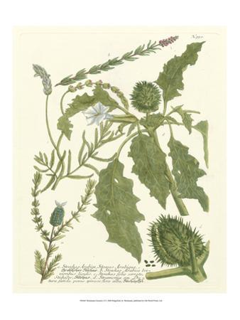 Weinmann Greenery II by Johann Wilhelm Weinmann