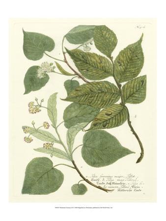 Weinmann Greenery III by Johann Wilhelm Weinmann