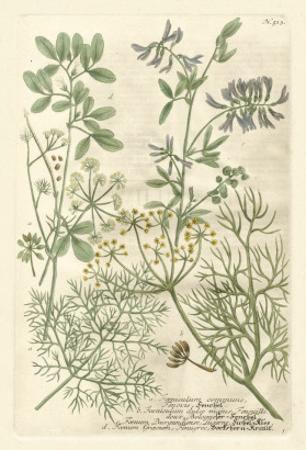 Weinmann's Garden IV by Johann Wilhelm Weinmann