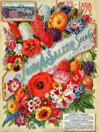 John A. Salzer Seed Co. Spring 1898: Flowers of Paradise