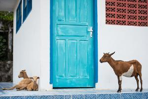 Goats, Indonesia, Southeast Asia by John Alexander