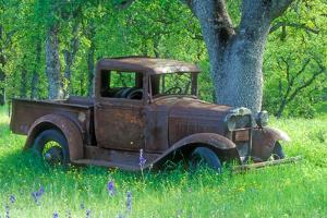 A Rusting 1931 Ford Pickup Truck Sitting in a Field under an Oak Tree by John Alves