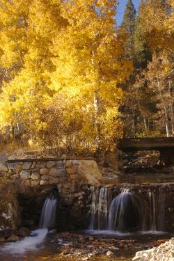 A Small Stream Cascades over a Rock Dam Amid Fall Aspens in the Sierra by John Alves