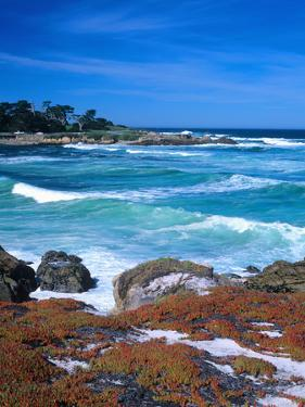 Beach, California, USA by John Alves