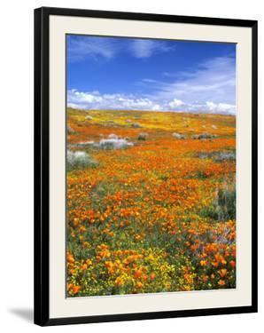 California Poppy Reserve, Lancaster, California, USA by John Alves