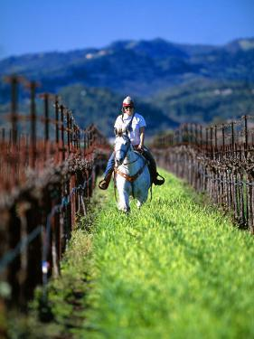 Equestrian Riding in a Vineyard, Napa Valley Wine Country, California, USA by John Alves