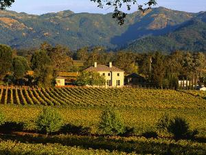 Estate and Vineyard, Napa Valley, California by John Alves