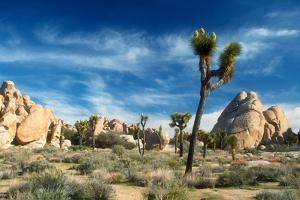 Joshua Trees Among the Large Granite Rocks of Joshua Tree National Park by John Alves