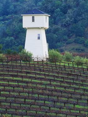 Silver Oak Cellars, Alexander Valley Wine Country, California by John Alves